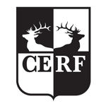 Faculty Members to speak at CERF in The City 2018